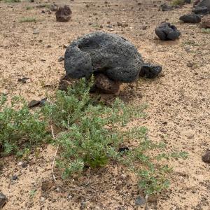 Végétation désertique