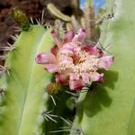 cactus_16