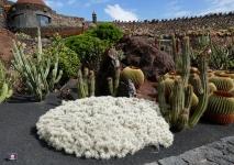 cactus_19