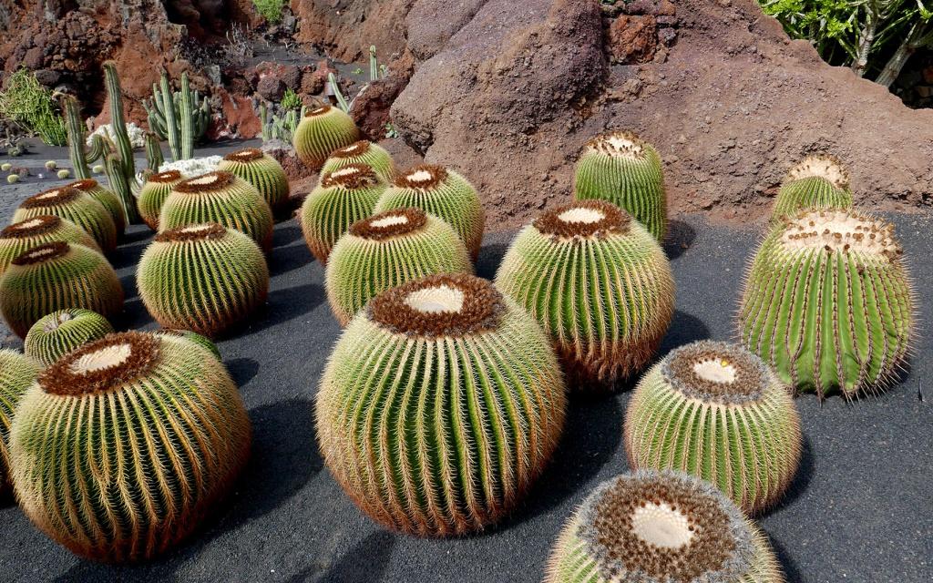 cactus_20