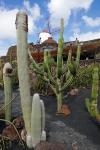 cactus_22