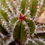cactus_25