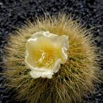 cactus_27