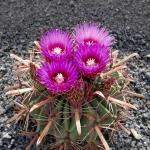 cactus_28