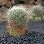 cactus_29