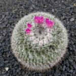 cactus_30