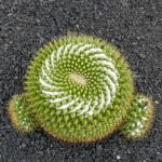 cactus_31