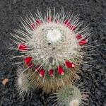 cactus_34