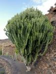 cactus_42