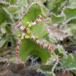 cactus_44