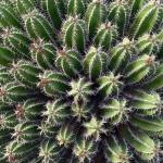 cactus_9